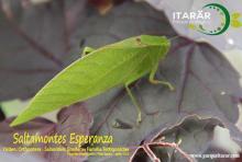 Parque Itarar-Saltamontes Esperanza