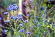 beneficios de las plantas silvestres