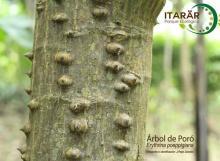 Poró Parque Ecológico Itarär