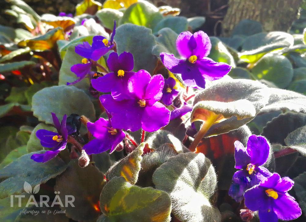 violeta-foto-semanal